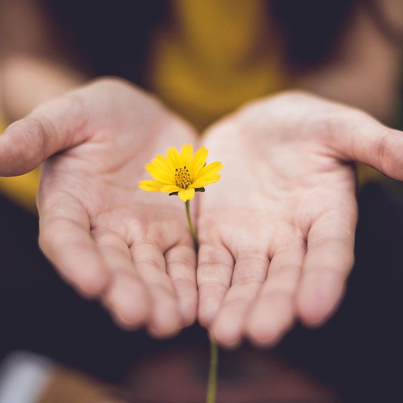 mainss ouverte avec une fleur jaune